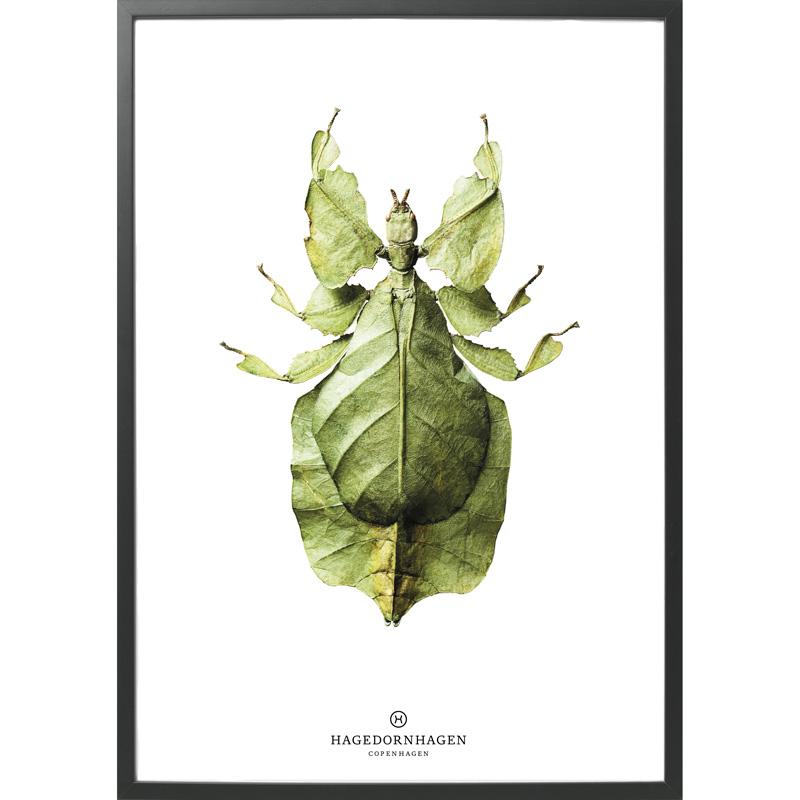 Hagedornhagen-Insect-B10
