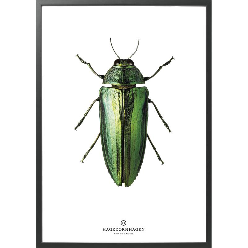 Hagedornhagen-poster-insekt-b9