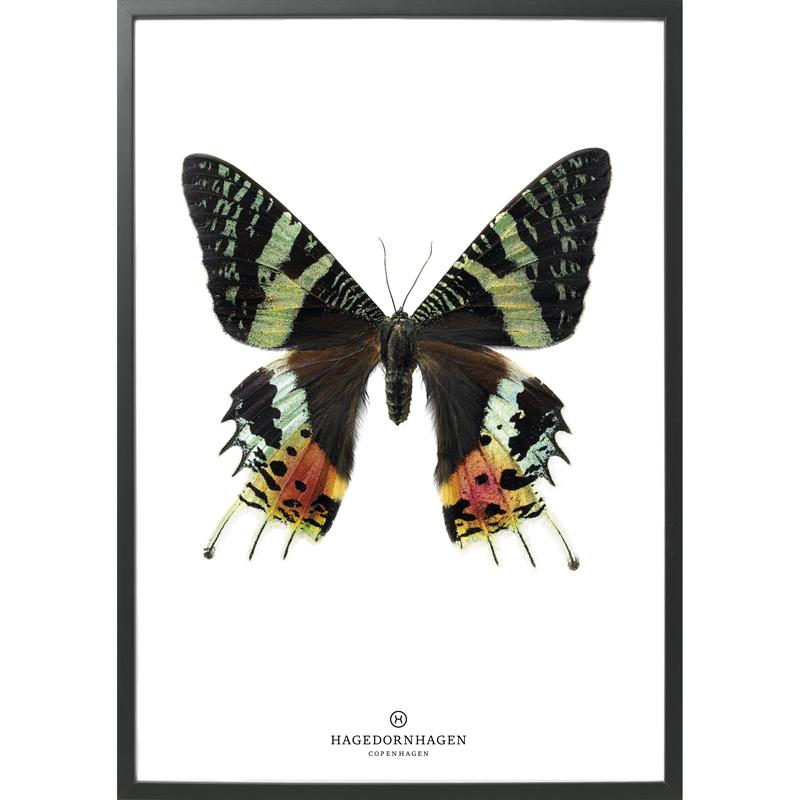 Hagedornhagen-poster-sommerfugl
