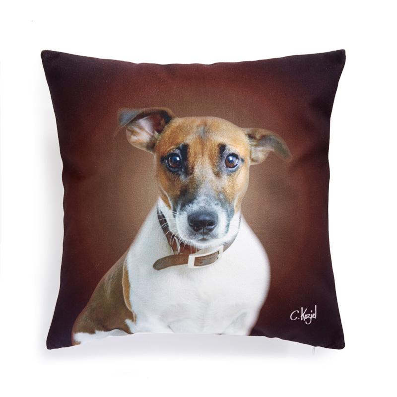 Koziel-pude-jack-russel-terrier