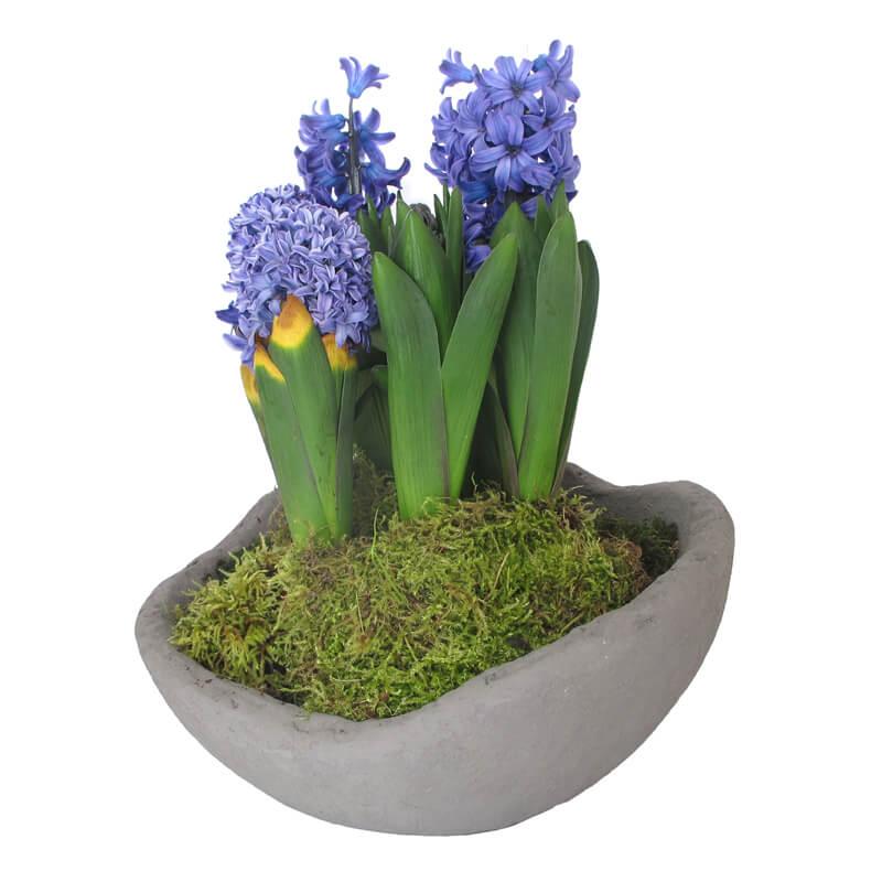 Serax-Plantekrukke-cement