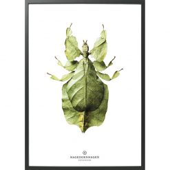 hagendornhagen-insekt-b10