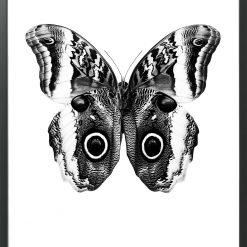 hagendornhagen-poster-butterfly