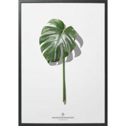 hagendornhagen-poster-palm